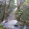 The River Ribble upstream of Washpit Mills, Cartworth