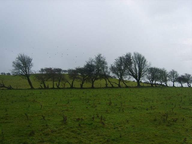 Old Hedge Line