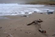 Branch on Norwick beach
