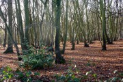 Wood at the edge of Tiptree
