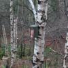 Bird Box near Craigiehill