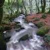 Stream in Bosahan Woods