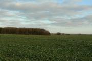 The end of Barleyholme Wood