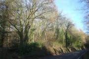 Woodland by A3072 near Shobrooke