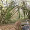 Colehill, woodland
