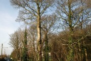 Greenacres, Cornwood Road, Plympton