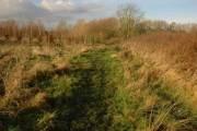 Stoulton Community Woodland