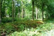 Woodland near Arley Wood