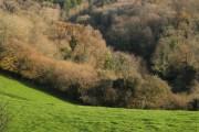 A valley between woods near Lindridge Hill