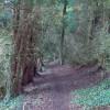 In Syreford Plantation