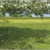 Minchinhampton Common in blossom