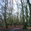 Hearsall Common, Christmas 2009