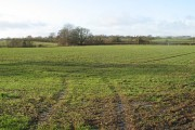 Field by Langley Cottage