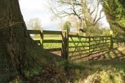 Gate, Ayntree
