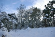 Highbeeches Forest