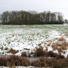 View of Bell's Grove across a snowy marsh pasture