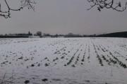 Farm fields between path & Hamble Lane
