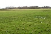 Earthworks in a field. Cuttyfield