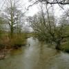 River Culm - downstream
