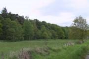Woodland by the Ravenglass & Eskdale Railway