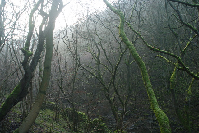 Mossy branches in Cressbrook Dale