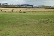 Farmland by the Rumbling Burn