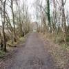 Auckland Walk near Bishop's Close Wood