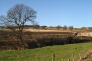 Grass field, Abernyte