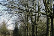 Woodland walk, Higher Rushcroft
