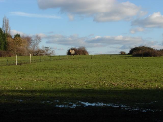 Fields, Scotts Grove Road