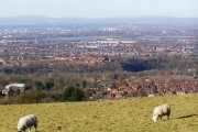 Sheep grazing on the side of Werneth Low