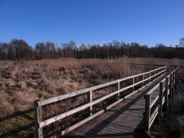 Reedbed & Board walk at Low Barns Nature Reserve
