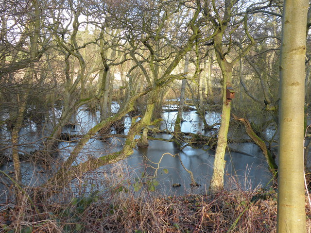 Alder Wood at Low Barn Nature Reserve