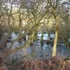 Alder Wood at Low Barn Nature Reserve
