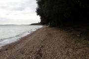 Solent seashore between Cowshot & Lepe