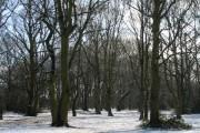 Hearsall Common woodland