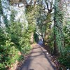 Tree-lined path along Romsey Road