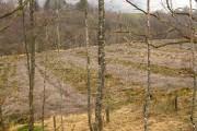 Felled plantation, Glen Roy