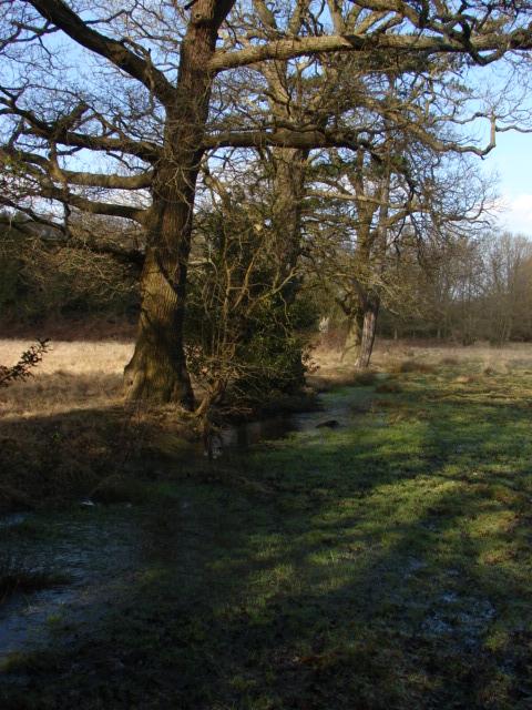 Meadows near Littlewick Common