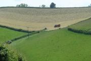 Early June Harvest