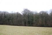Carcombe Wood