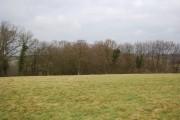 Woodland near Lower Gate Farm