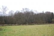 Horseland Wood