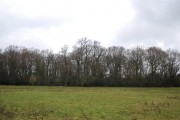 Horseland Wood (2)