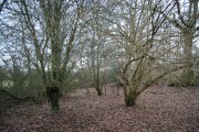 Horeman's Wood by the River line