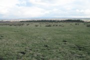 Rough grassland, Longridge