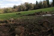 Firewood by Ringslade Road, Highweek