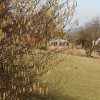Hedgerow catkins