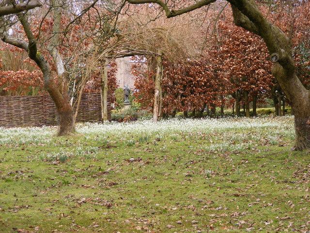 Snowdrop Field