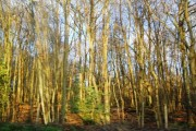 Snape Wood in Winter sunshine